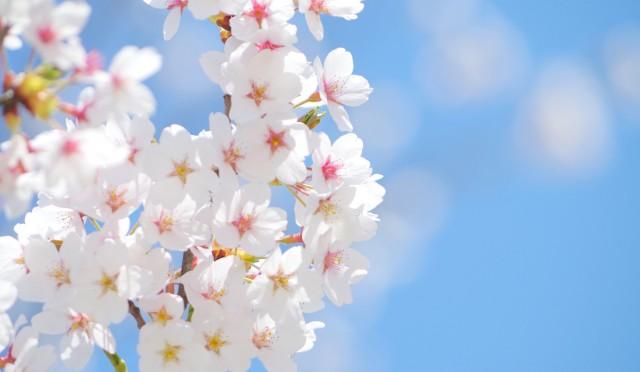 暦上、春になりました。春の養生は「陽気」コントロール。