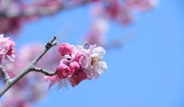 立春2月04日。暦上、春になりました。春の養生は「陽気」コントロール。