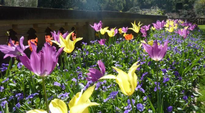 s_springtime_conniehabash_counseling_spirituality_yoga_menlopark