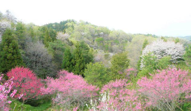 春の養生のコツは、「のびのび!」(古典 四気調神大論より)