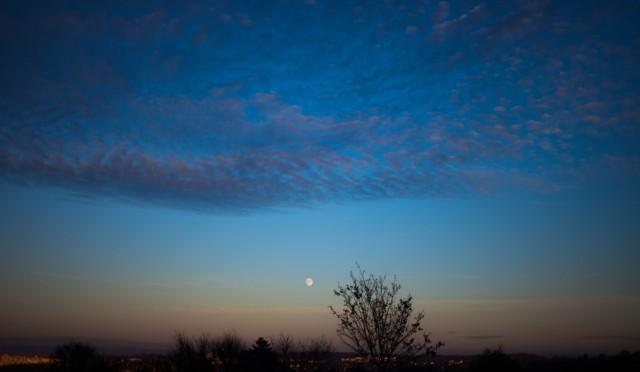 満月の…「バッチフラワー入門セミナー」リアル & on-line 予約受付中