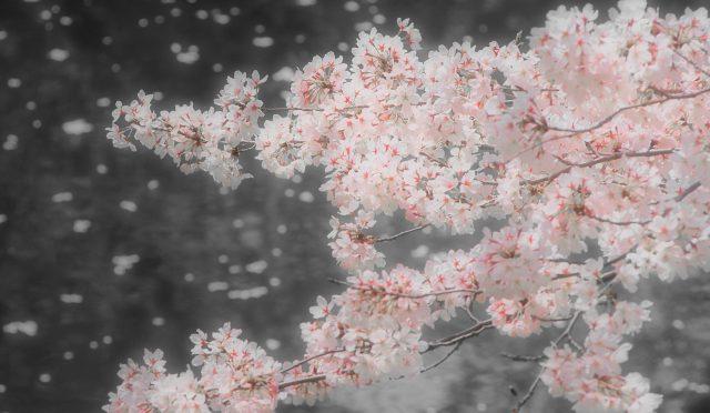 春は、風の季節です。