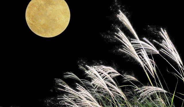 十五夜 中秋の名月は、里芋で。